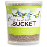 Pacific Bird Dried Mealworm Bucket